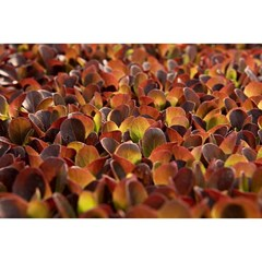 We eat with our eyes first 🙌🏻
