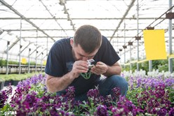 Beneficial Insects Patrol Greenhouse Plants for Pests Image