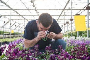 Beneficial Insects Patrol Greenhouse Plants for Pests Thumbnail