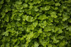 Miracles of Microgreens: Benefits and Much More Image