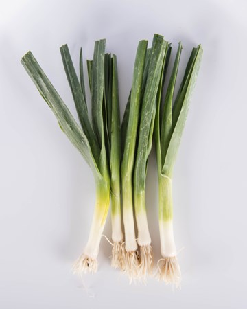 Allium-Leek-Traditioinal-Baby-Isolated