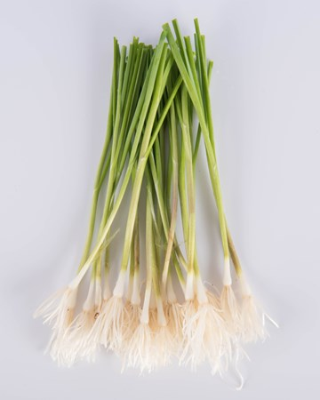 Allium-Leek-Traditioinal-Petite-Isolated