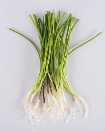 Allium-Onion-Mixed-Demi-Isolated