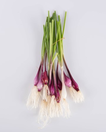 Allium-Onion-Purplette-Ultra-Isolated