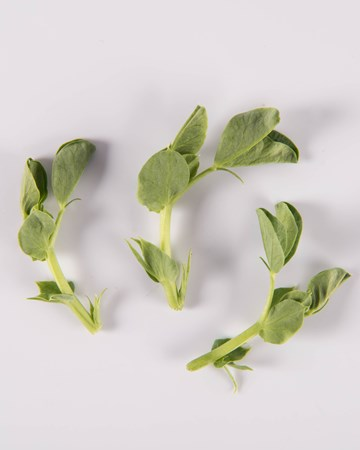 Pea Tendrils-Memo-Isolated