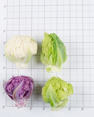 Cauliflower-Size Grid