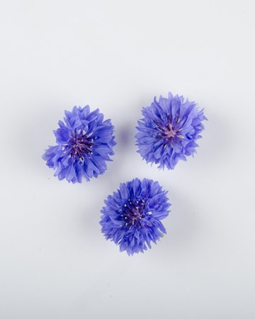 Blue Bachelor Button Flowers