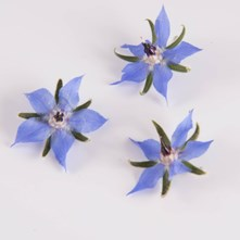 Blue Borage Edible Flowers