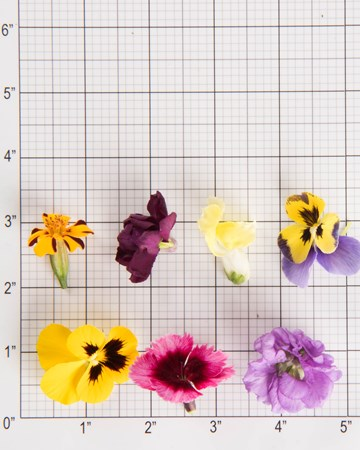 Edible Flowers-Mixed Flowers-Size Grid