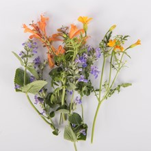 Flowering Herb Sampler