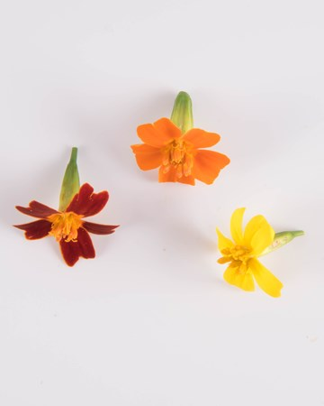 Edible Flower-Mixed Citrus Marigolds-Isolated
