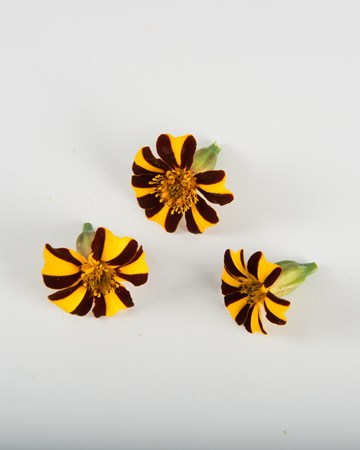 Edible Flowers-Marigold-French-Isolated