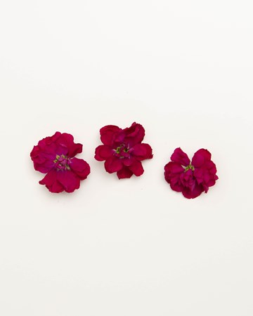 Edible-Flower-Mini-Floret-Ruby