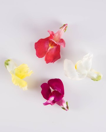 Edible Flowers-Snapdragon-Mix-Isolated