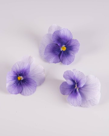 Edible Flowers-Pansy-Blueberry Sorbet-Isolated