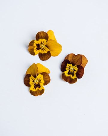 Burnt Honey Sorbet Viola