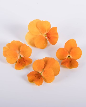 Viola-Orange-Marmalade-Isolated