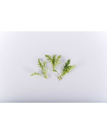 Greens-Arugula-Red Ribbon-NG Petite-Isolated