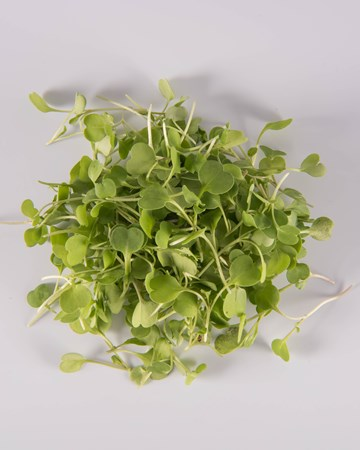 Arugula-Micro-Isolated