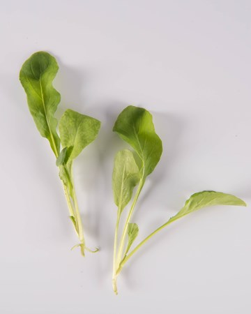 Arugula-NG Ultra-Isolated