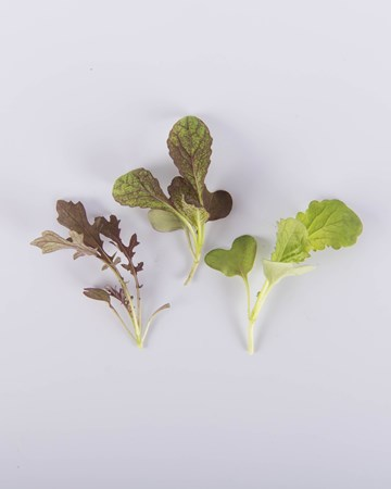 Greens-Mustard-Mixed-Petite-Isolated