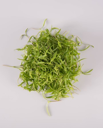 Chervil-Micro-Isolated