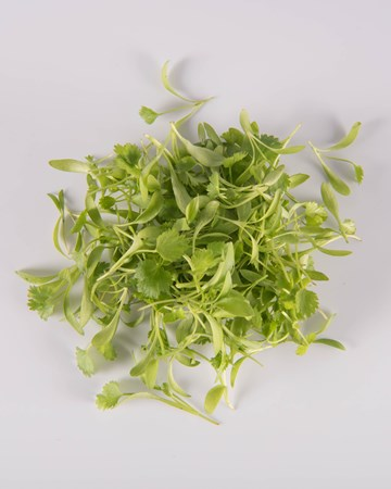 Cilantro-Micro-Isolated
