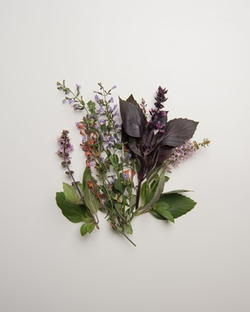 Herbs-Sampler-Flowering-Isolated