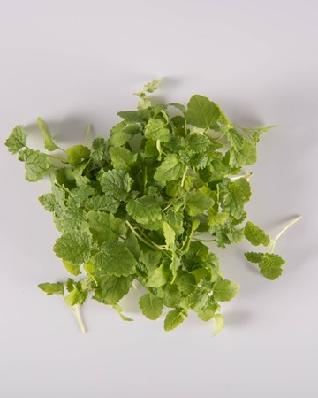 Lemon Balm-Micro-Isolated