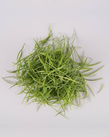 Lemon Grass-Micro-Isolated