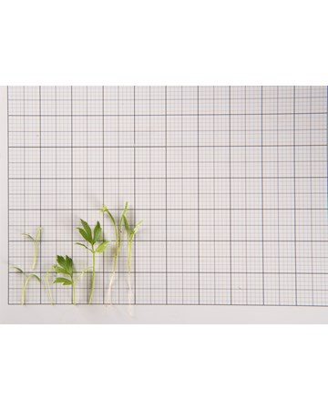 Lovage Size Grid