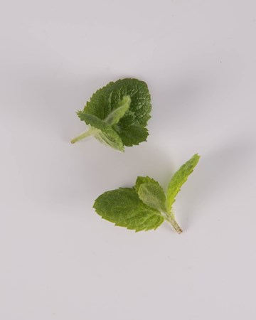 Mint-Demi-Apple-Isolated