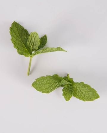 Mint-Demi-Spearmint-Isolated