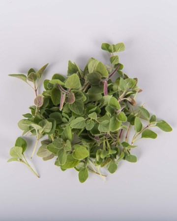 microgreen-greek-oregano-isolated
