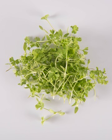 Parsley-Micro-Isolated