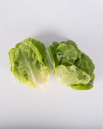 Lettuce-Green-Bibb-Baby-Isolated