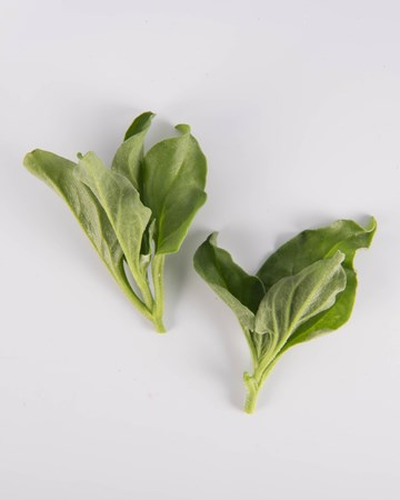 Lettuce-Ultra-Verde-Isolated