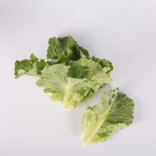 Winter Density Romaine Lettuce
