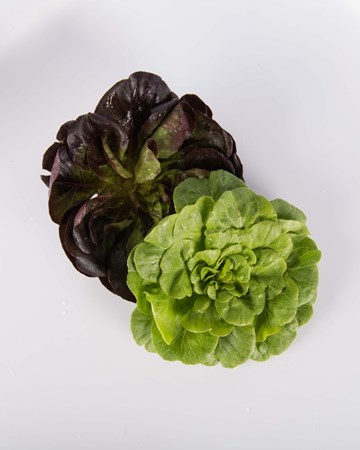 Lettuce-Mixed-Rosette-Baby-Isolated