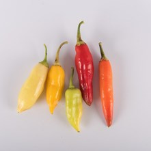 Mixed Aji Peppers