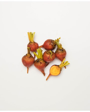 Beets-Gold-Ultra-1-of-1