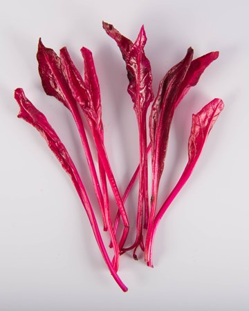 Leaves-Sunset Beet Blush-Isolated