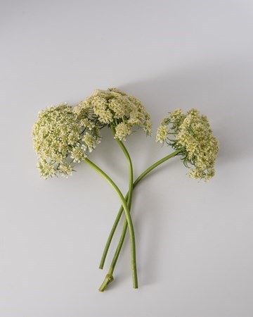 Blooms-Vegetable-Carrot-Isolated