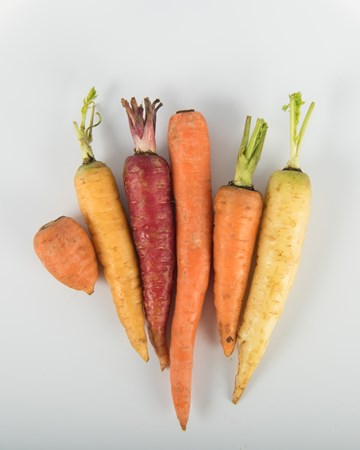 Young Mixed Carrots