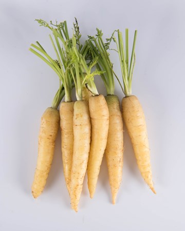 Carrot-White-Baby-Isolated