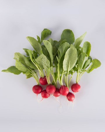 Radish-Cherry Bomb Radish-Ultra-Isolated