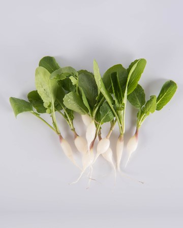 Radish-Daikon-Demi-Isolated