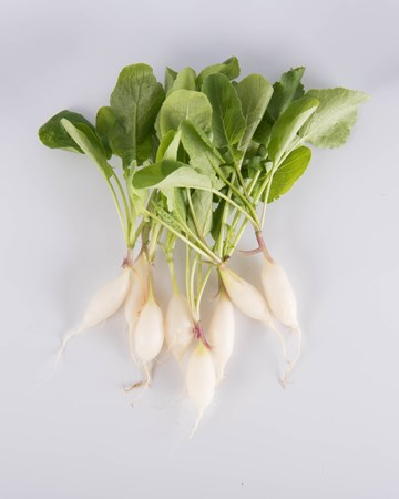Radish-Daikon-Ultra-Isolated