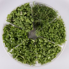Cress Blend Small Bite