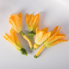 Squash with Bloom
